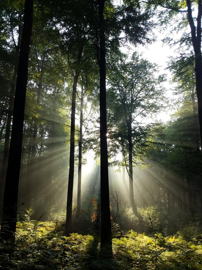 Meer bos tegen klimaatopwarming