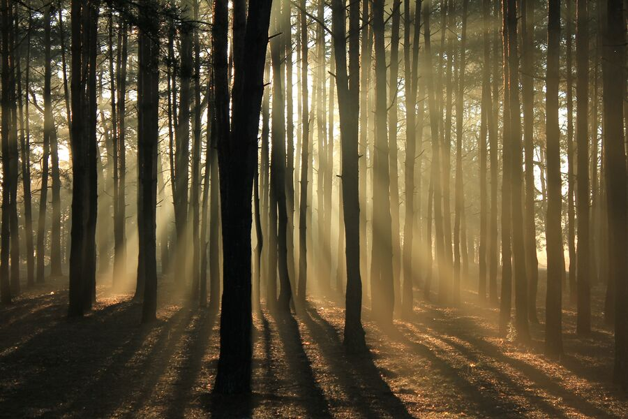 Forest bathing (French guide)
